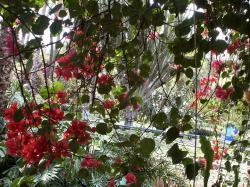 jardins-majorelle3-4.jpg