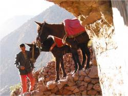 mules-au-refuge-timichchi.jpg
